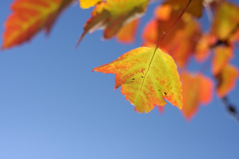 Colors of Autumn / I., October 2008