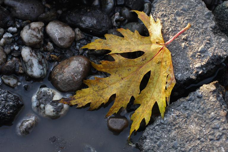 Colors of Autumn / XI., November 2008